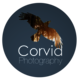 Corvid Photography