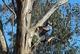 Arborist in Fairfield