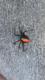 Pest Eradication Tasmania